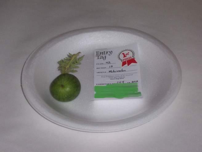 prize watermelon